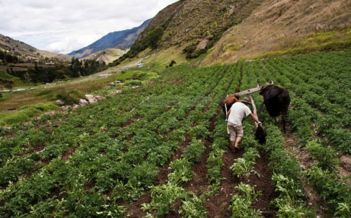 Créditos agrícolas - Créditos agrícolas