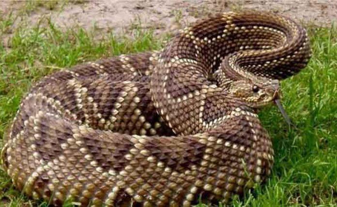 Niño mordido por una serpiente en Lara