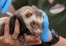Zoológicos en EEUU vacunan contra el covid-19