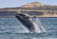 Día Mundial de las Ballenas y los Delfines - Día Mundial de las Ballenas y los Delfines