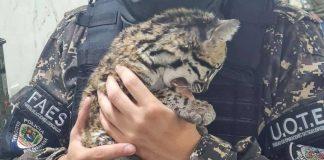 FAES rescató un Cunaguaro