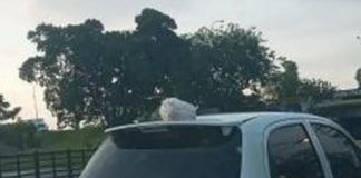 Llevarte la basura en el carro - Llevarte la basura en el carro