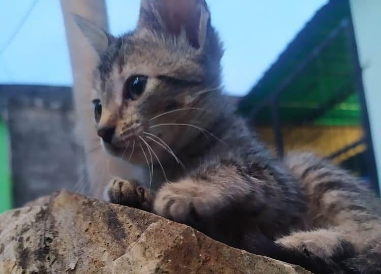 Perro o un gato - Perro o un gato