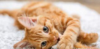 Día Internacional del Gato - Día Internacional del Gato
