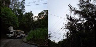 Árbol cortado por Corpoelec derribó dos postes en Miranda (+Video)