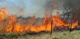 quema indiscriminada en Tocuyito - quema indiscriminada en Tocuyito