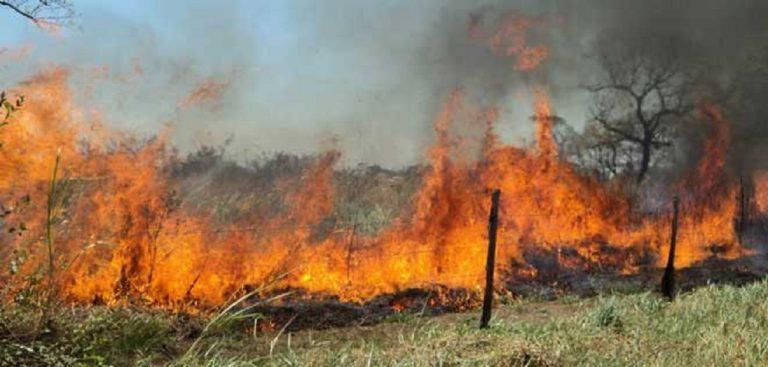 Perjudicados más de 500 vecinos por quema indiscriminada en Tocuyito