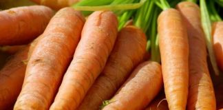 Zanahoria - Zanahoria