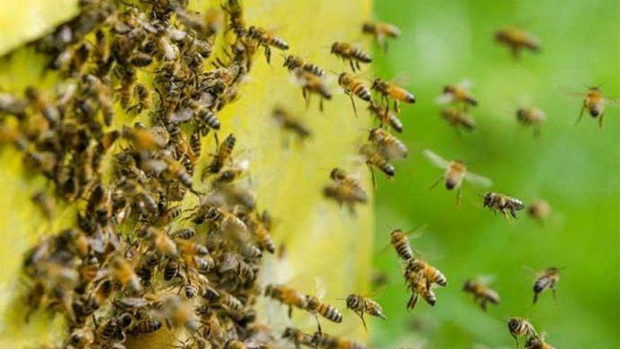Picadas de abejas en el Mercado de Mayorista - Picadas de abejas en el Mercado de Mayorista