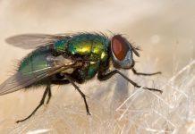 espantar moscas - espantar moscas