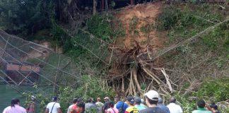 Cuatro niños lesionados tras caída de un árbol