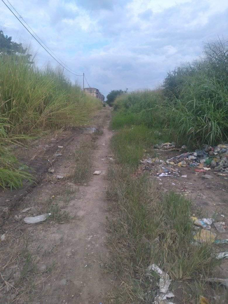 Habitantes de Ciudad Plaza solicitan cuadrillas de limpieza - Habitantes de Ciudad Plaza solicitan cuadrillas de limpieza