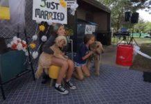 Bodas de perros - Bodas de perros