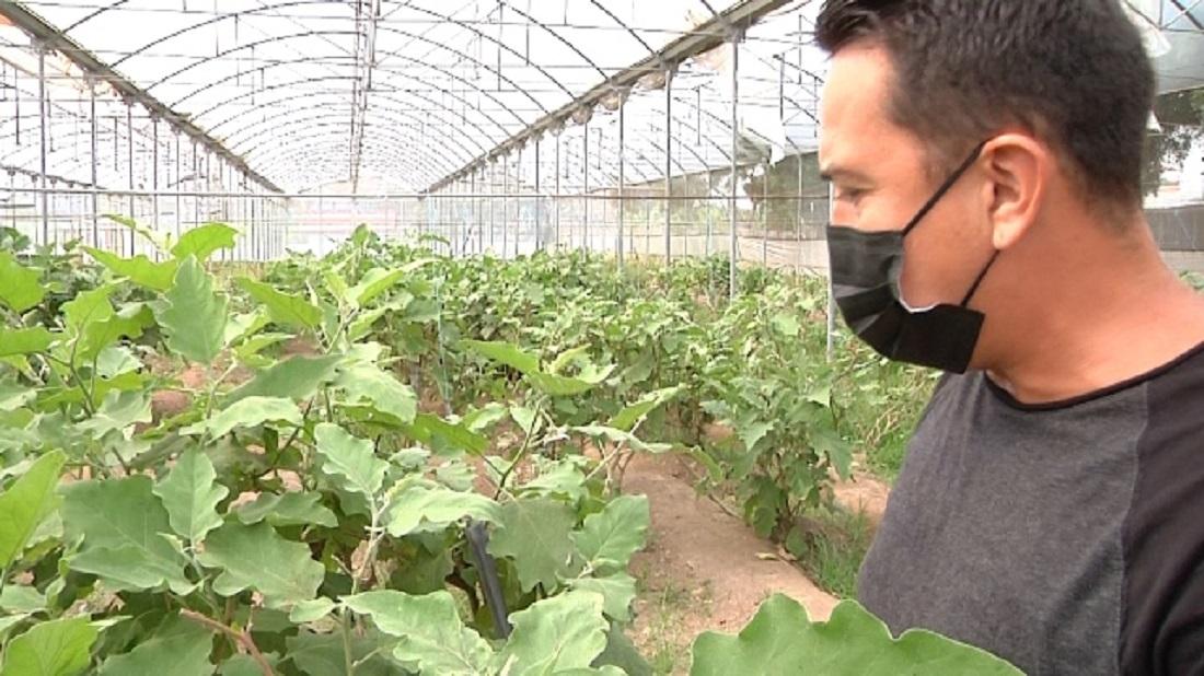 Industrias Diana reactiva producción agrícola - Industrias Diana reactiva producción agrícola