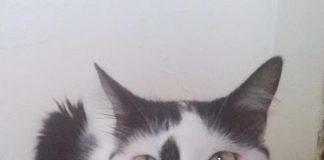 Galletas para gatos - Galletas para gatos