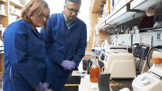 riñón bioartificial - riñón bioartificial