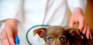 Condenan a veterinario por grabarse abusando de perros
